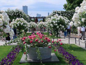 横浜市で、昨年開催した「第33回全国都市緑化よこはまフェア」の成果を継承する『ガーデンネックレス横浜2018』がスタートから折返地点を迎えました。会場のひとつである「みなとエリア」では、「横浜市の花」に制定されているバラが満開となり、港の4つのローズガーデンで計4,400株のバラが市民や観光客の目を楽しませています。