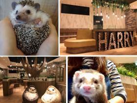 """世界初のハリネズミカフェで有名なHARRYが待望の横浜に動物カフェを新OPEN !! 原宿で行列のできるお店が、グルメの街""""横浜中華街""""に遊びの新しいスポットとして、癒しの動物カフェ"""" HARRY 横浜店 """"OPENしております。"""