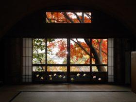 大佛次郎記念館では、施設貸出のない日に限り、毎年紅葉の季節に和室を公開しています。 今年は、開催中の「花と語らう」展に寄せて、大佛次郎自らが撮影した花の写真を初公開するほか、大佛次郎の時代小説「櫻子」のお香にまつわるエピソードなどをご紹介します。