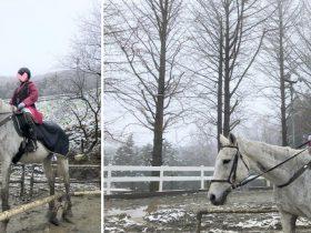クレイン乗馬クラブ 神奈川 無料体験